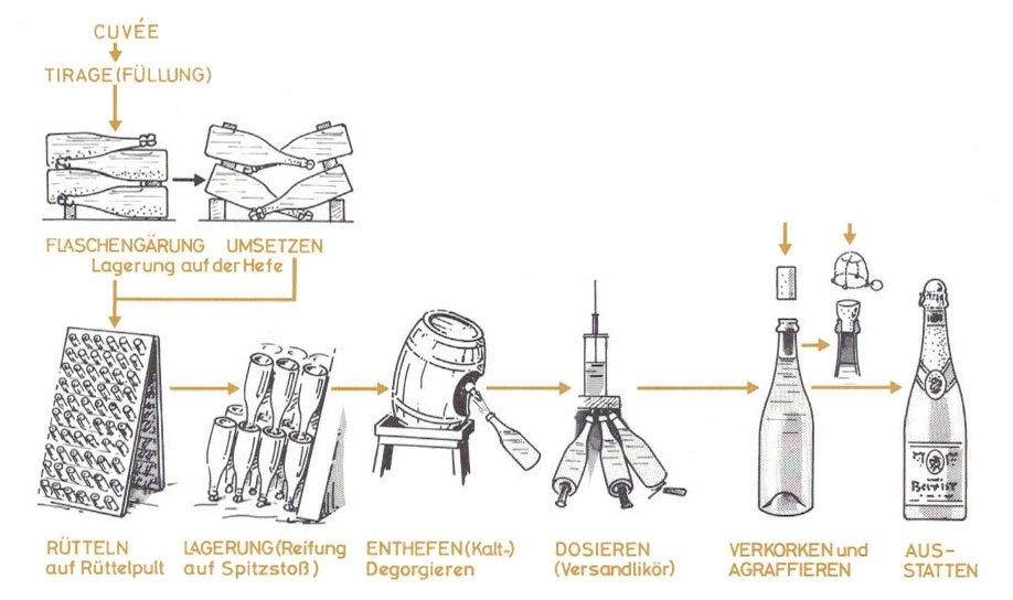 Schematische Darstellung der Sektherstellung